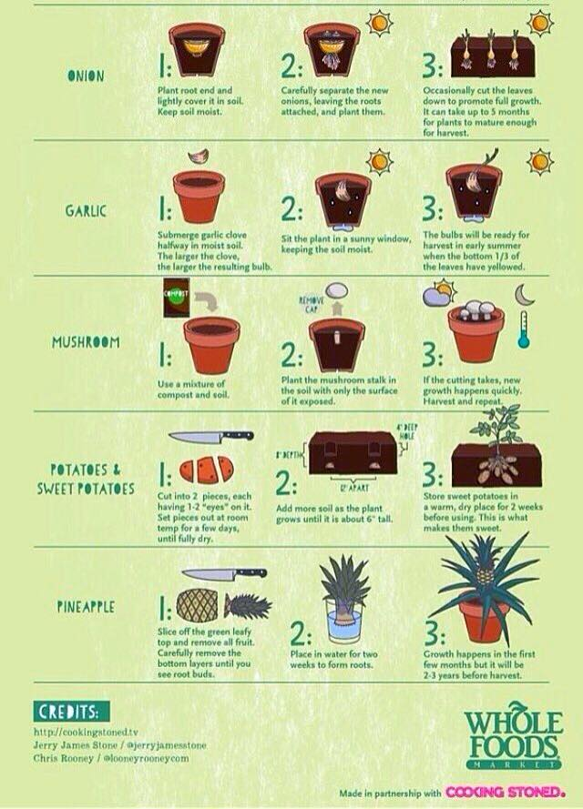 ¿Cultivamos unas hortalizas?